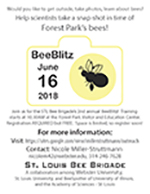 St. Louis BeeBlitz announcement flier