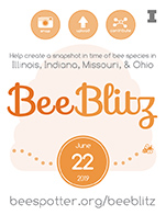 General BeeBlitz announcement flier